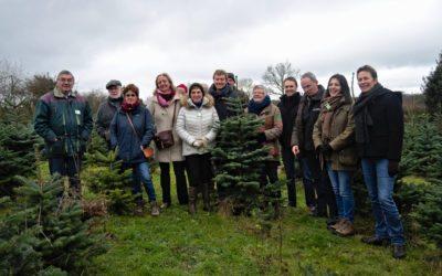 Un sapin de Noël écoresponsable ? Un premier pas dans la bonne direction, mais il en faudra d'autres !