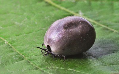 Question au Député en charge du pôle Social et Santé relative à la maladie de Lyme
